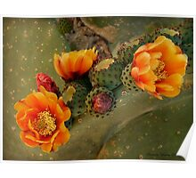 Cactus Beauty Poster