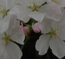 Pretty White Flowers Sticker
