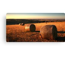 Golden Plain - Barrabool Hills Canvas Print
