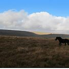 Dartmoor pony by Zozzy-zebra