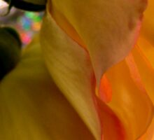Yellow Rose Reflection Sticker