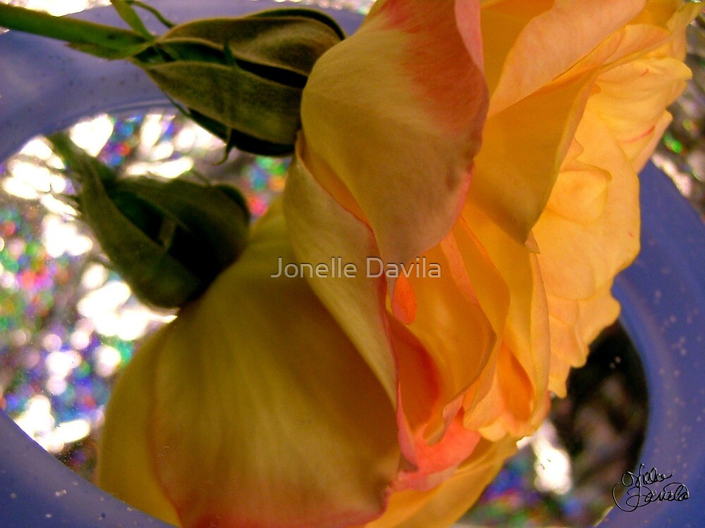 Yellow Rose Reflection by Jonelle Davila