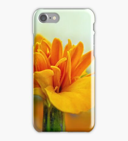 Marigold in light background iPhone Case/Skin