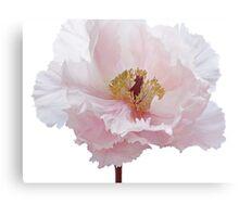 Pink Tree Peony Flower Metal Print