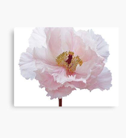 Pink Tree Peony Flower Canvas Print