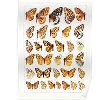 The Macrolepidoptera of the world a systematic account of all the known Butterflies Moths Adalbert Seitz V1 V3 1906 174 Argynnis Euptoieta Poster