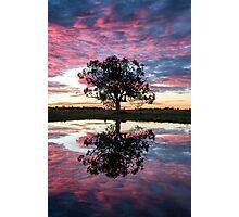 Mirror tree Photographic Print