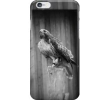 Falcon, Bird of Prey iPhone Case/Skin