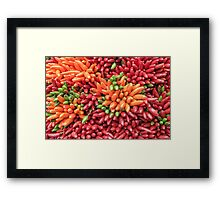 Colorful hot chili peppers background Framed Print