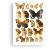 The Macrolepidoptera of the world a systematic account of all the known Butterflies Moths Adalbert Seitz V1 V3 1906 173 Euptoieta Argynnis Canvas Print