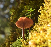 Fungi in the Sun by Kylie Reid