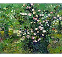 Vincent van Gogh Roses Photographic Print