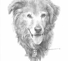 furry old dog drawing by Mike Theuer
