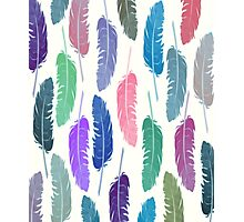 Colorful Feathers Photographic Print