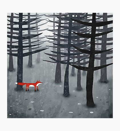 The Fox and the Forest Photographic Print