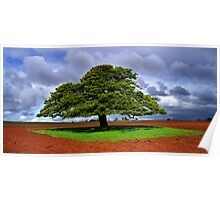 Tree on a Carpet Poster