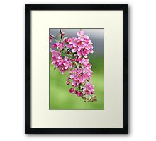 Beautiful pink buds Framed Print