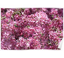 Blossoms blossoms! Poster