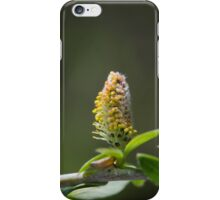 Pussy Willow In Spring iPhone Case/Skin
