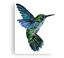 Nature Hummingbird Canvas Print