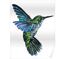 Nature Hummingbird Poster