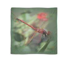 Red Male Skimmer or Firecracker Dragonfly Scarf