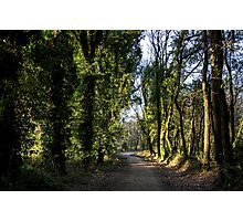Path through a forest Photographic Print