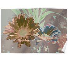 Designer daisies Poster