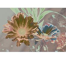 Designer daisies Photographic Print