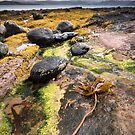 Udrigle Bay rocks by Christopher Cullen