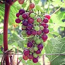 Mixed Grapes by Ludwig Wagner