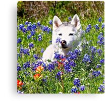 Siberian Husky in Spring Flowers Canvas Print