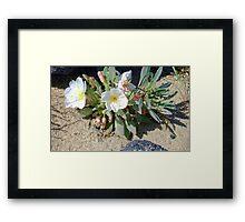 Desert Wildflower Framed Print