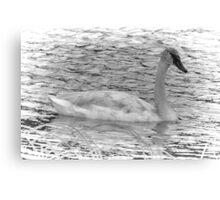 Trumpeter Swan (BW) Canvas Print
