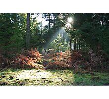 Sunlight beam Photographic Print