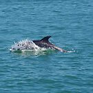 Dolphin in The Bay Of Islands by lezvee