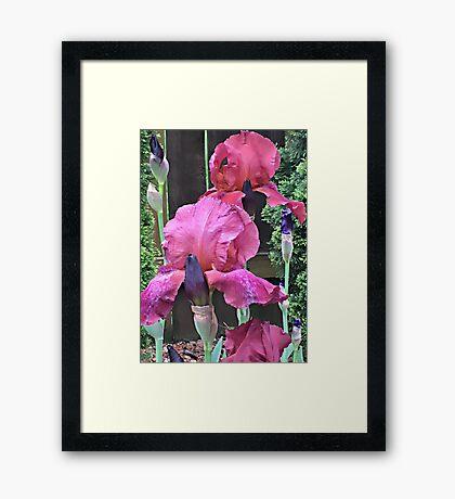Peaking Thru the Garden Framed Print