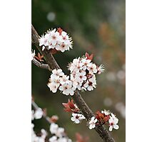 Spring Time Flowers Photographic Print