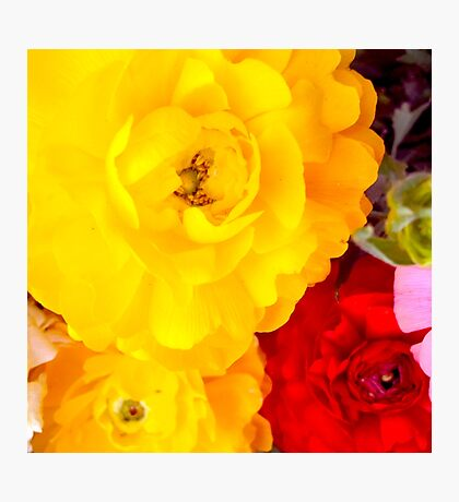 Vibrant Flowers - Yellow flowers and red flower Photographic Print