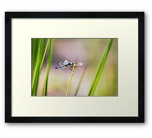 Dragonfly by Pond #1  Framed Print