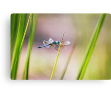 Dragonfly by Pond #1  Canvas Print