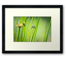 Dragonfly by Pond #2  Framed Print