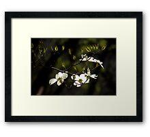 Flowering Dogwood in Sunlight Framed Print