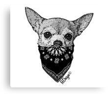 Animal Bandit - Chihuahua Canvas Print
