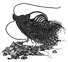 Spiky, spiky trilobite(y) Photographic Print