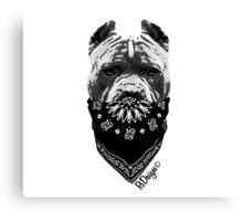 Animal Bandit - Pitbull Canvas Print