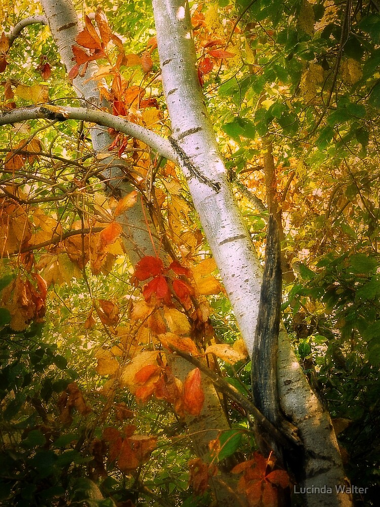 Turning Leaves by Lucinda Walter
