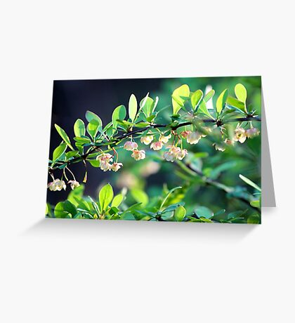 Naturalized Japanese Barberry Blossoms Greeting Card