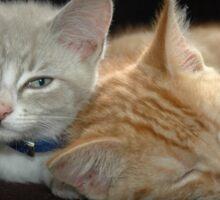 Cuddling kittens 2 Sticker