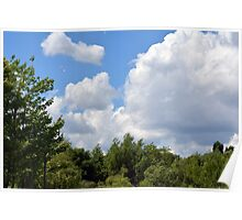 Trees tops with green leaves in the park with blue sky and white fluffy clouds. Poster